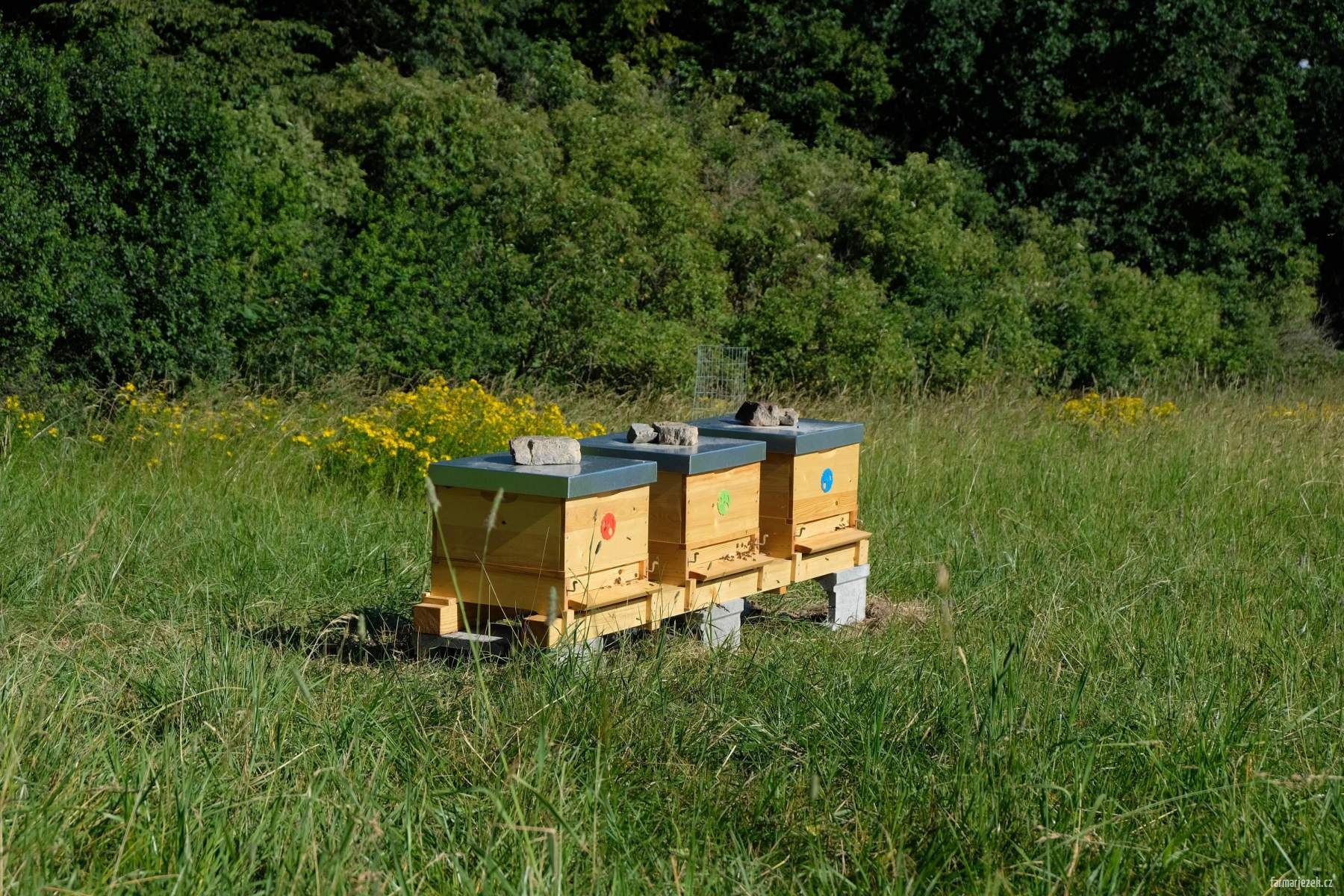 Včely na poli U dubu