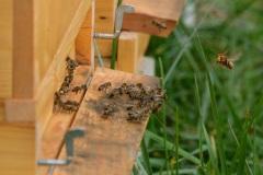 Včelky na poli U dubu