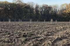 Agrolesnictví na poli U dubu
