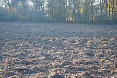 Agrolesnictví